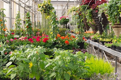 About | Arch Greenhouse